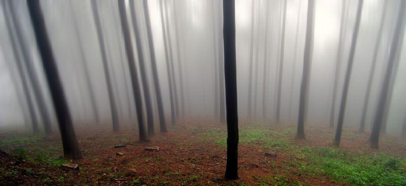 mist shrouded