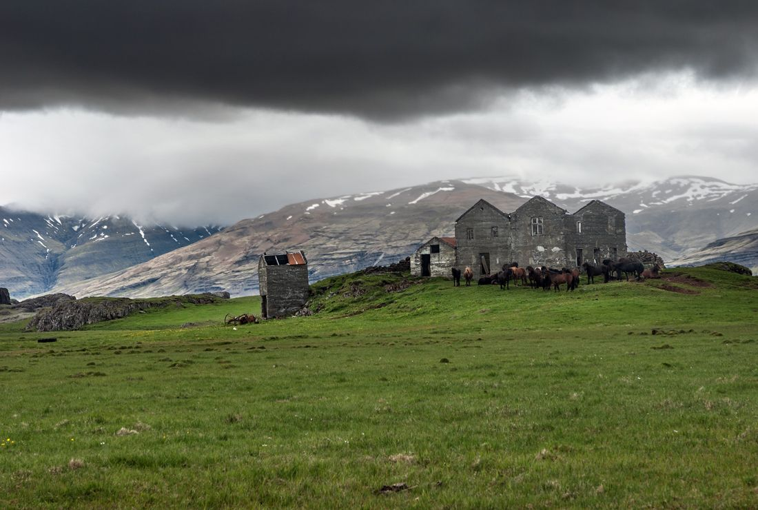 Icelandic horse farm