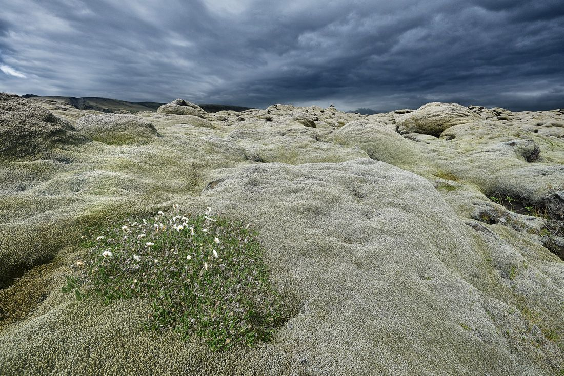 Eldhraun lava fields
